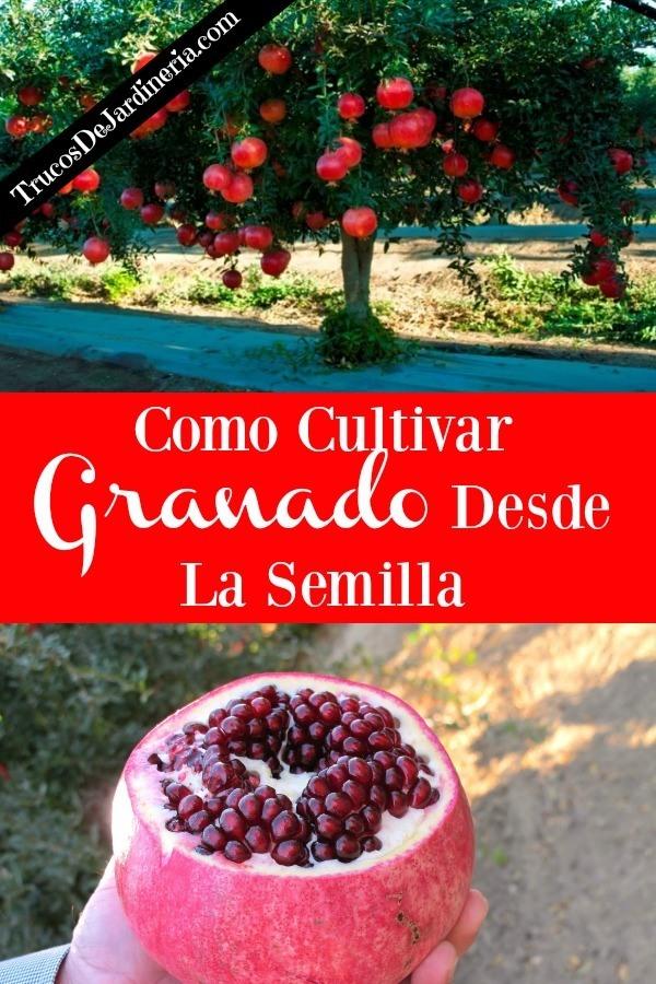 Como Cultivar Granado