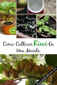 Como Cultivar Kiwi