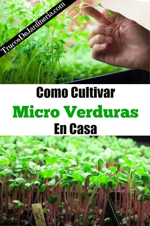 Como Cultivar Micro Verduras