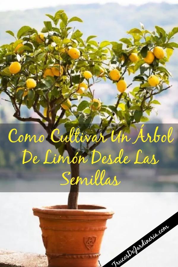 Cultivar Un Árbol De Limón Desde Las Semillas
