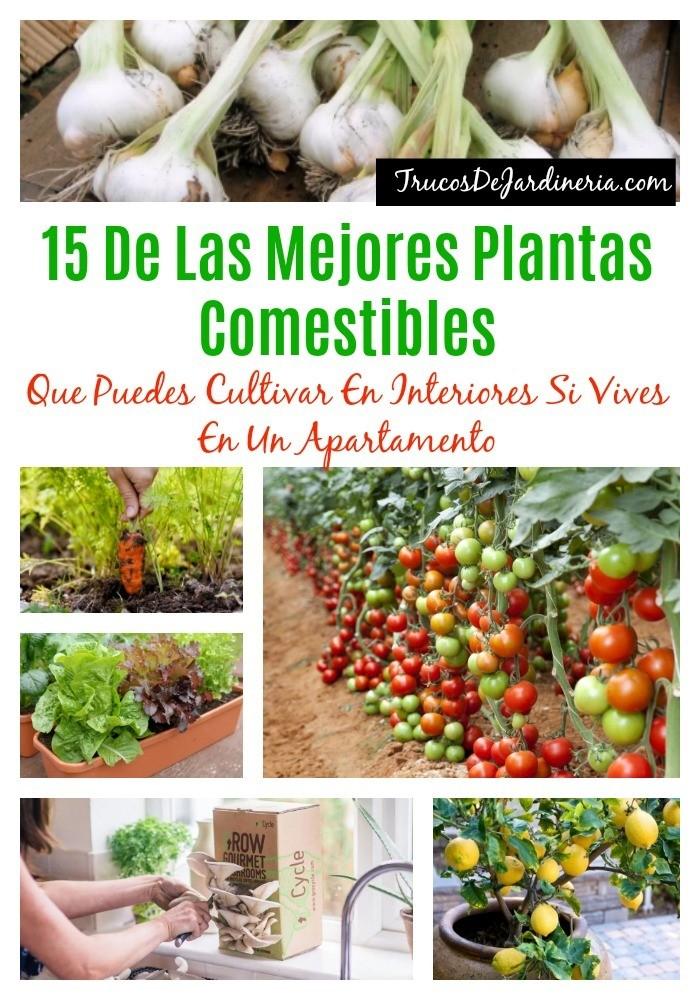 Mejores Plantas Comestibles