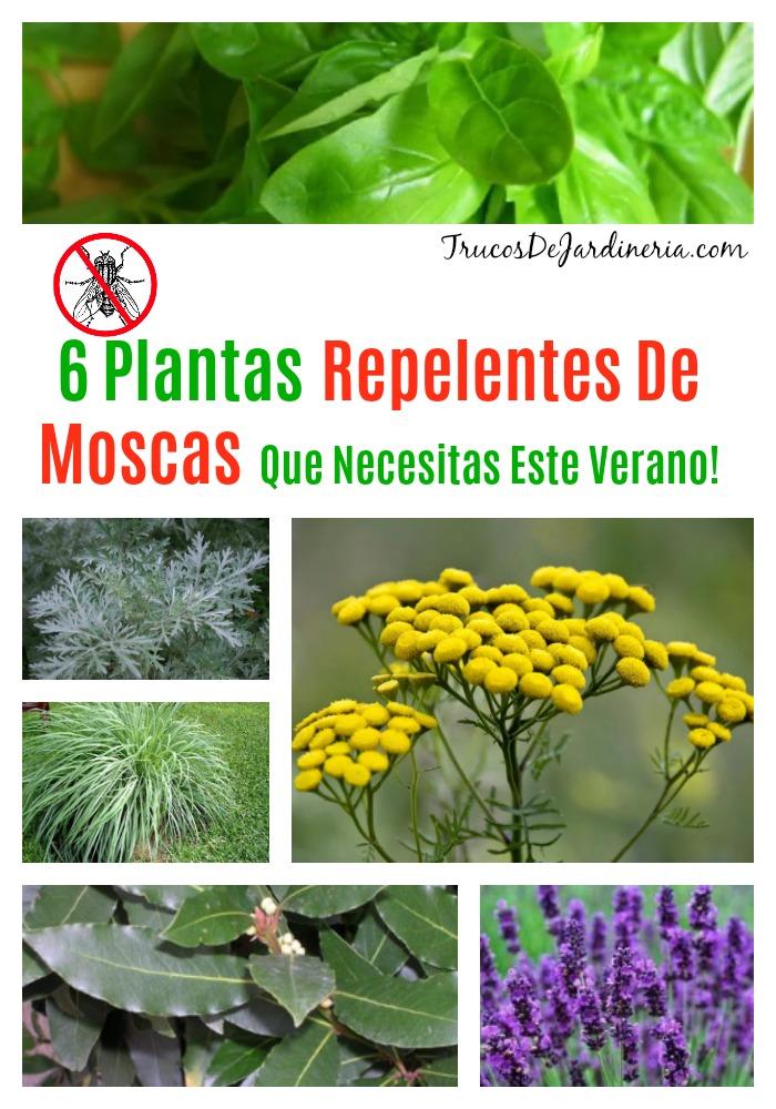 Plantas Repelentes De Moscas