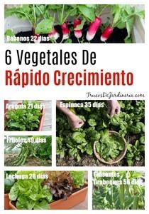 Vegetales De Rápido Crecimiento