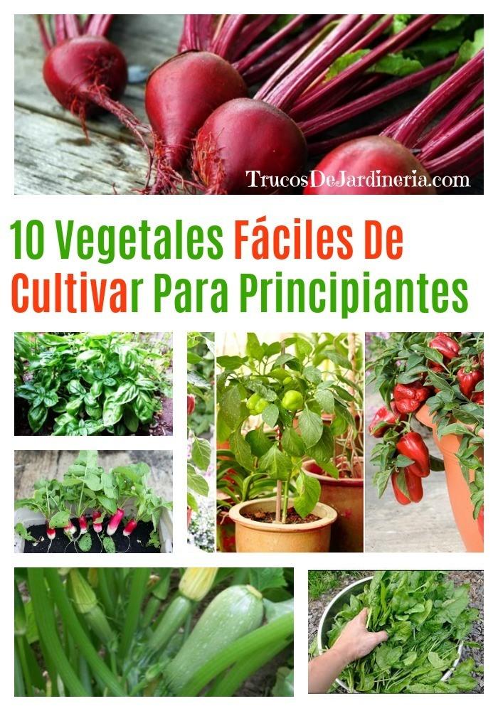 Vegetales Fáciles De Cultivar