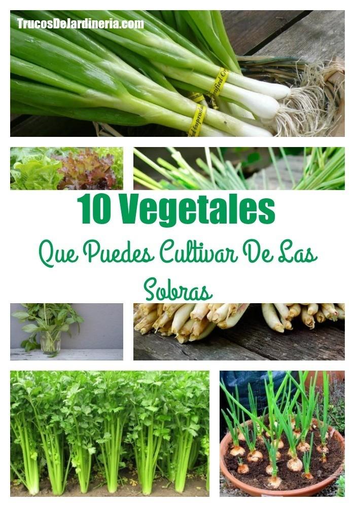 Vegetales Que Puedes Cultivar De Las Sobras