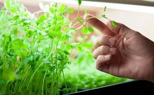 micro verduras