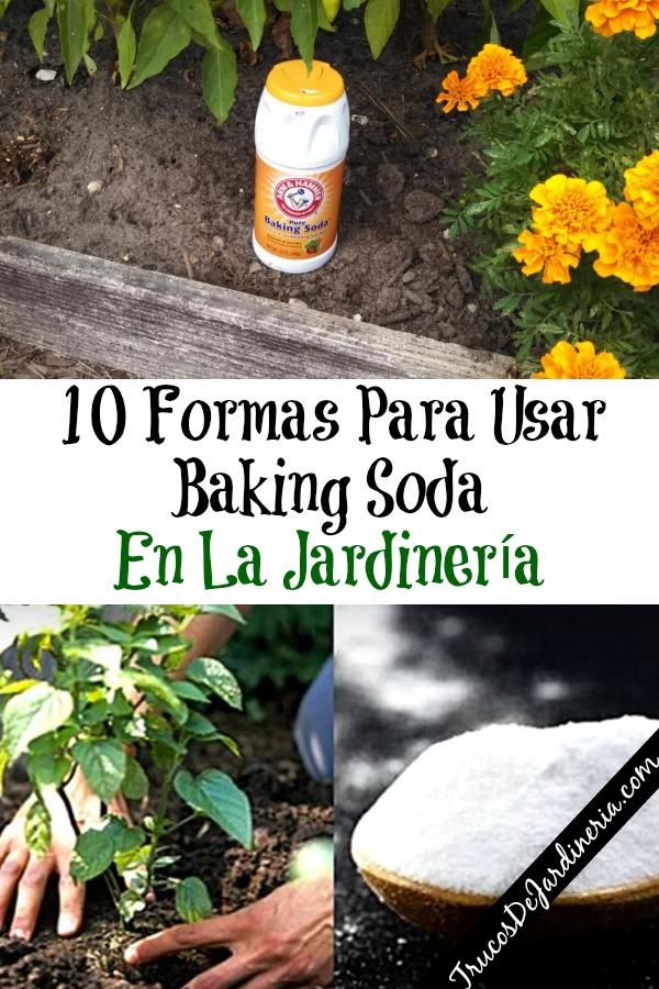 Baking Soda En La Jardinería