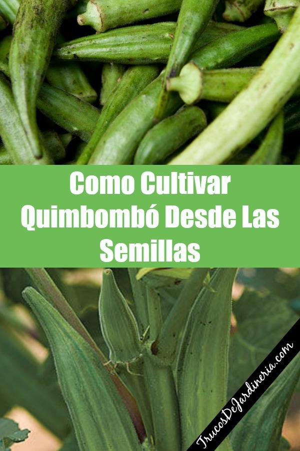 Como Cultivar Quimbombó