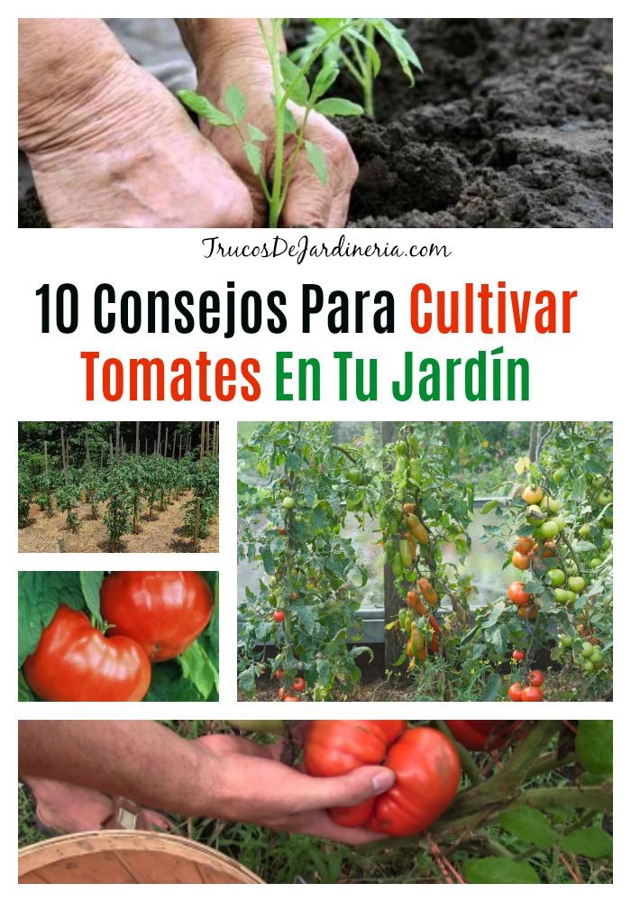 Consejos Para Cultivar Tomates