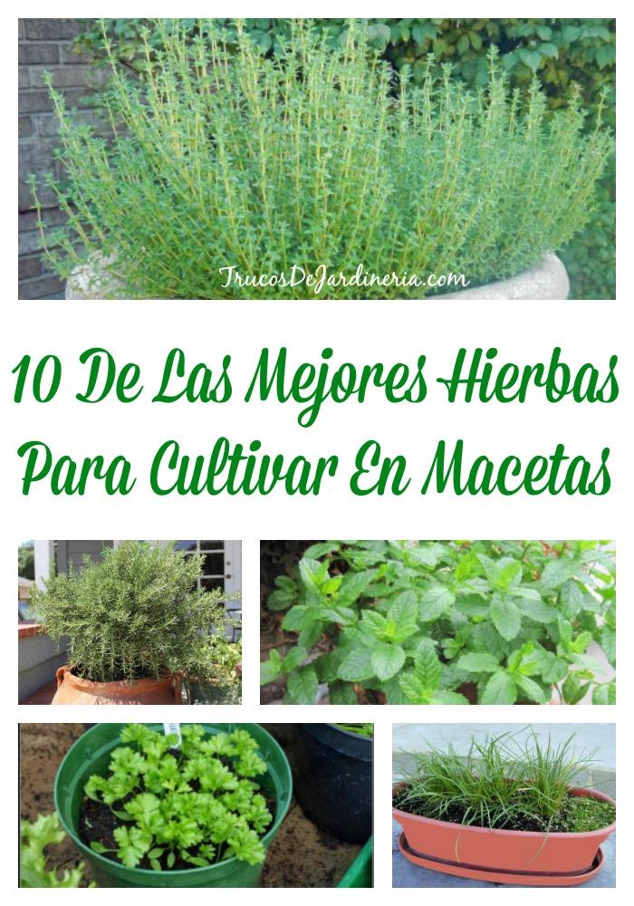 Hierbas Para Cultivar En Macetas