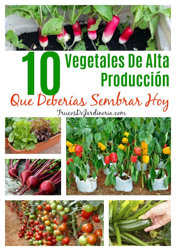 Vegetales De Alta Producción