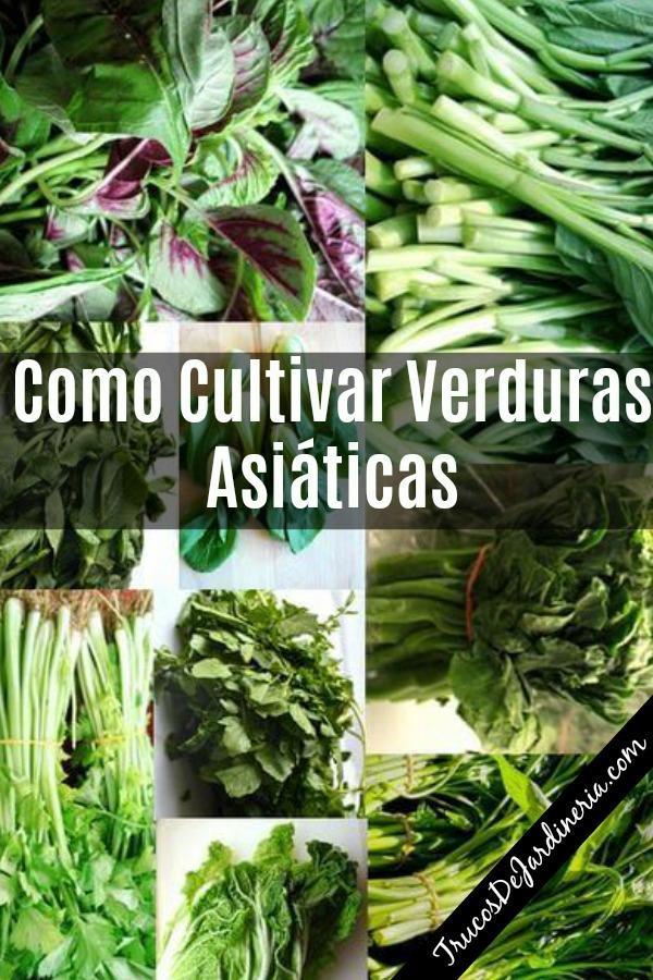 Como Cultivar Verduras Asiáticas