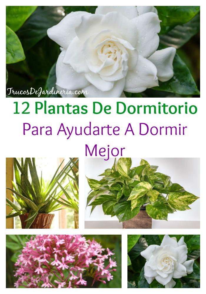 Plantas De Dormitorio