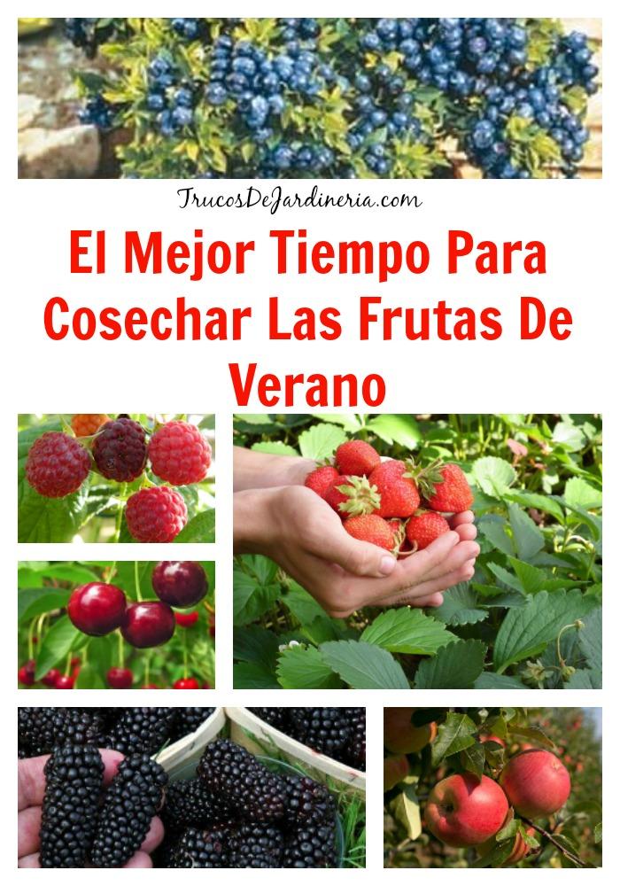 cosechar frutas de verano
