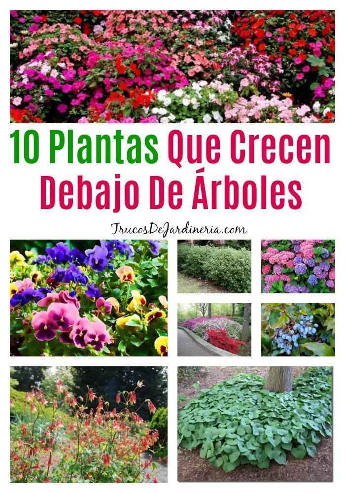 Plantas Que Crecen Debajo De Árboles