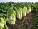 10 Vegetales Que Crecen Rápido
