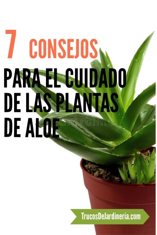Cuidado De Las Plantas De Aloe