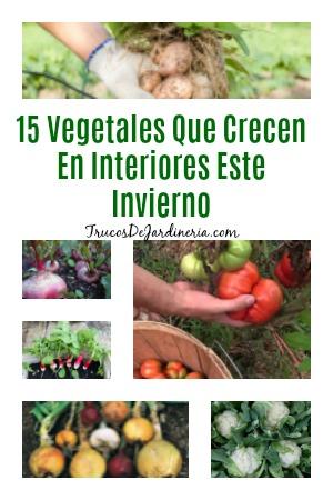 Vegetales Que Crecen En Interiores