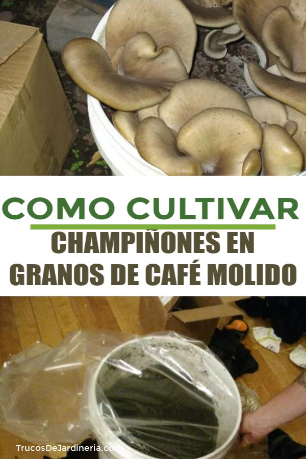 COMO CULTIVAR CHAMPIÑONES EN GRANOS DE CAFÉ MOLIDO