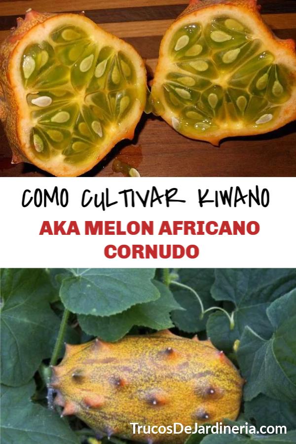 Como Cultivar Kiwano