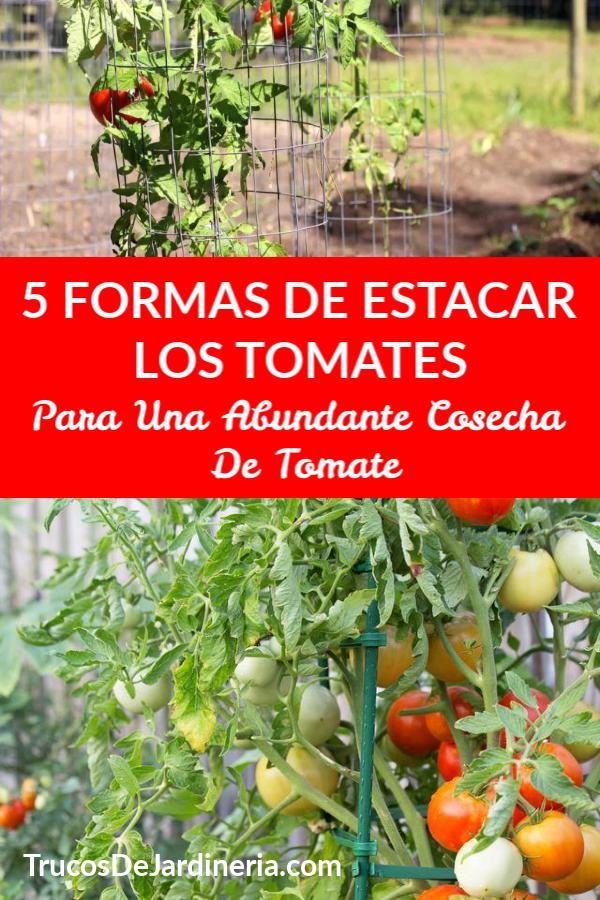 Formas De Estacar Los Tomates