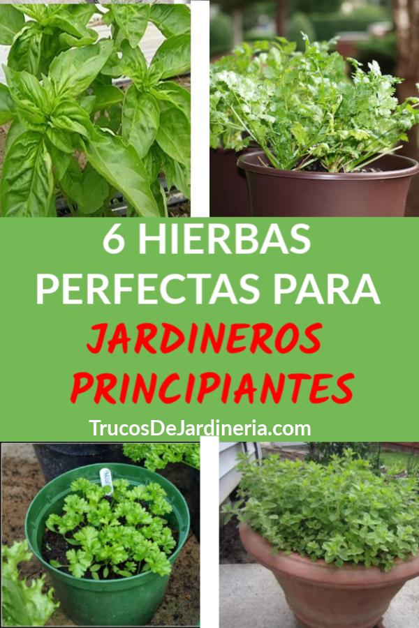 Hierbas Para Jardineros Principiantes