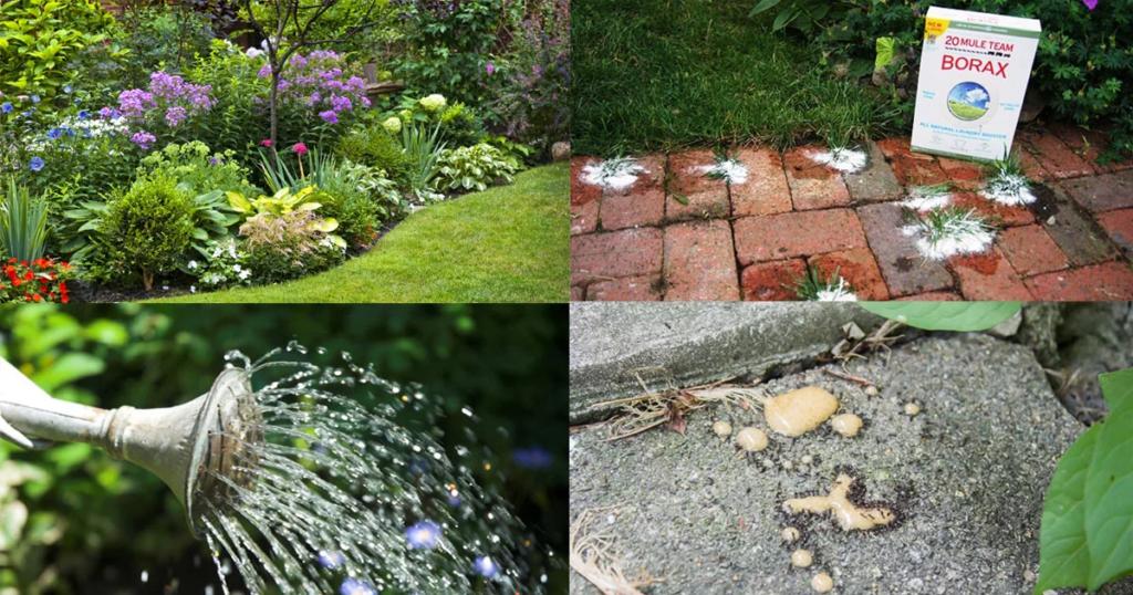 borax en el jardin