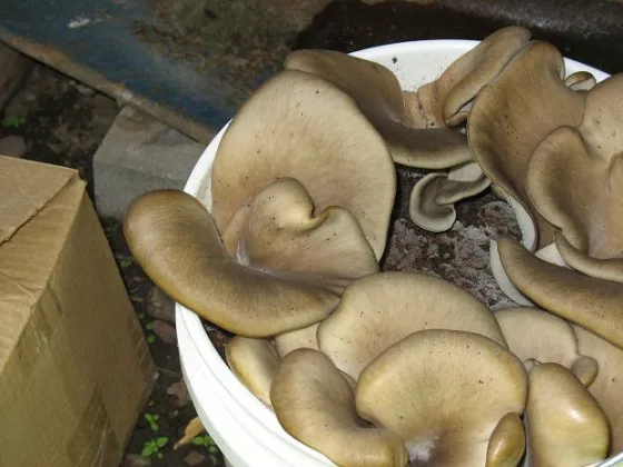 hongos en contenedores