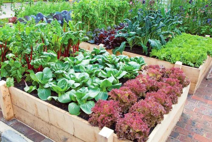 jardin para principiantes