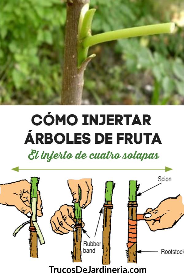 Entonces, ¿cómo injertar árboles frutales?  Hay varias formas diferentes, ¡pero te mostraremos una de las mejores y más fáciles técnicas de injerto llamada la técnica de injerto de cuatro colgajos!