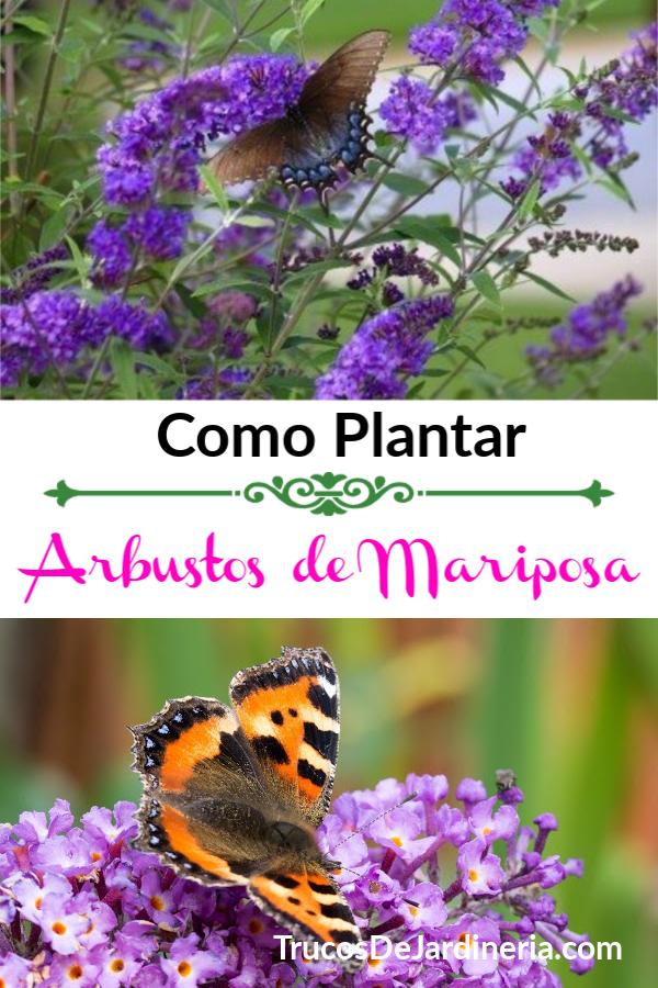 arbustos de mariposa