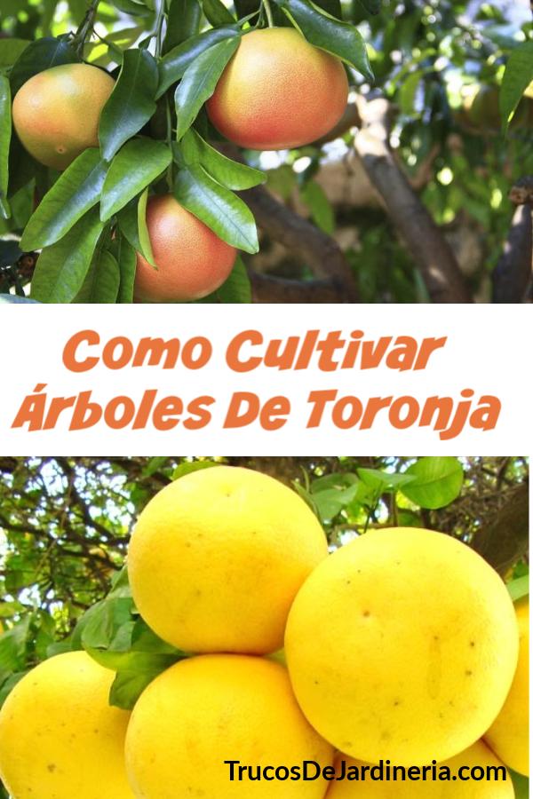 Cultivar Árboles De Toronja