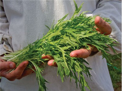 verduras mizuna