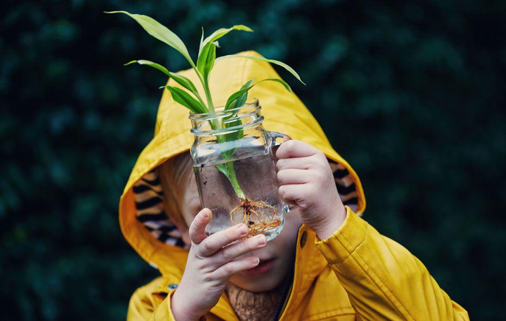 plantas que crecen en agua
