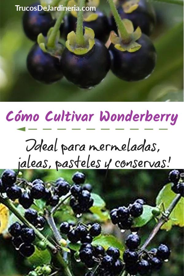 Cómo Cultivar Wonderberry