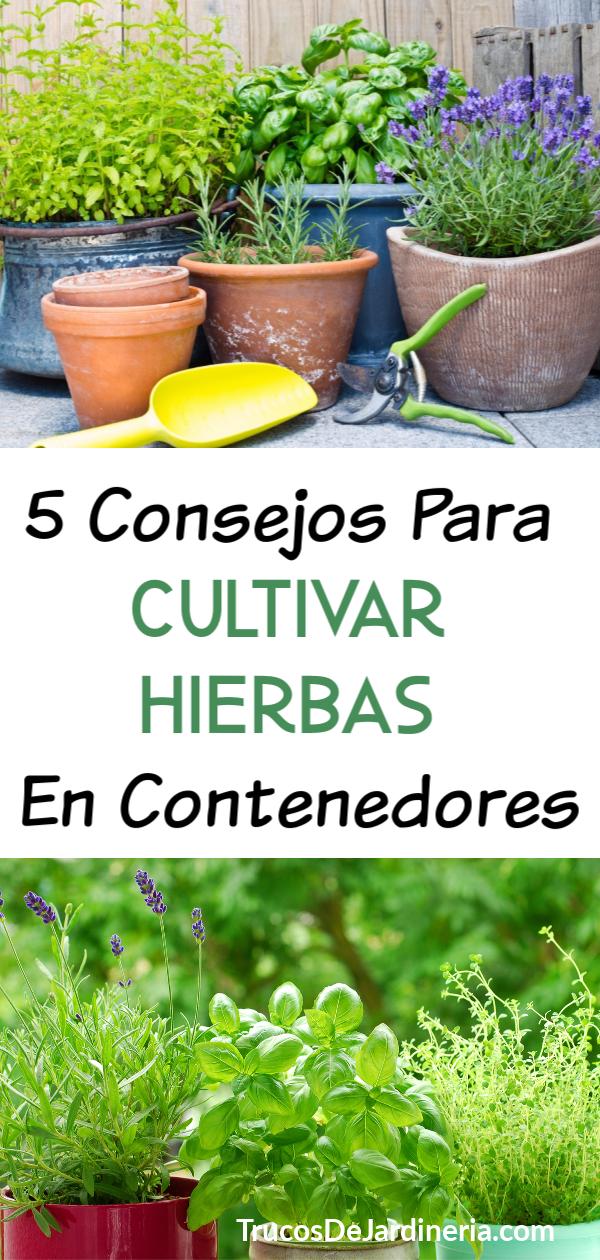 5 Consejos Para Cultivar Hierbas en Contenedores