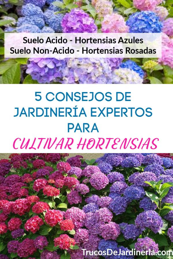 Cultivar Horetensias
