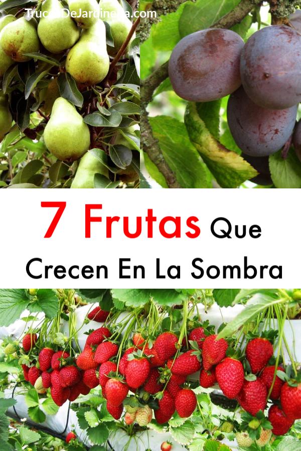 Frutas Que Crecen En La Sombra