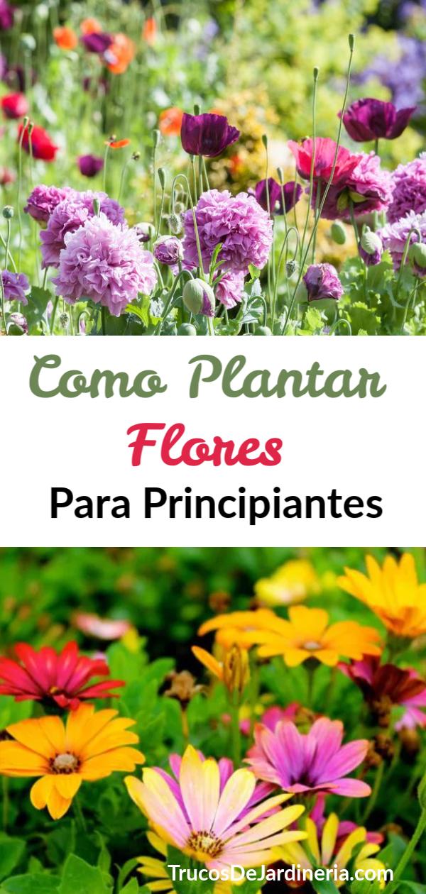 Como Plantar Flores Para Principiantes