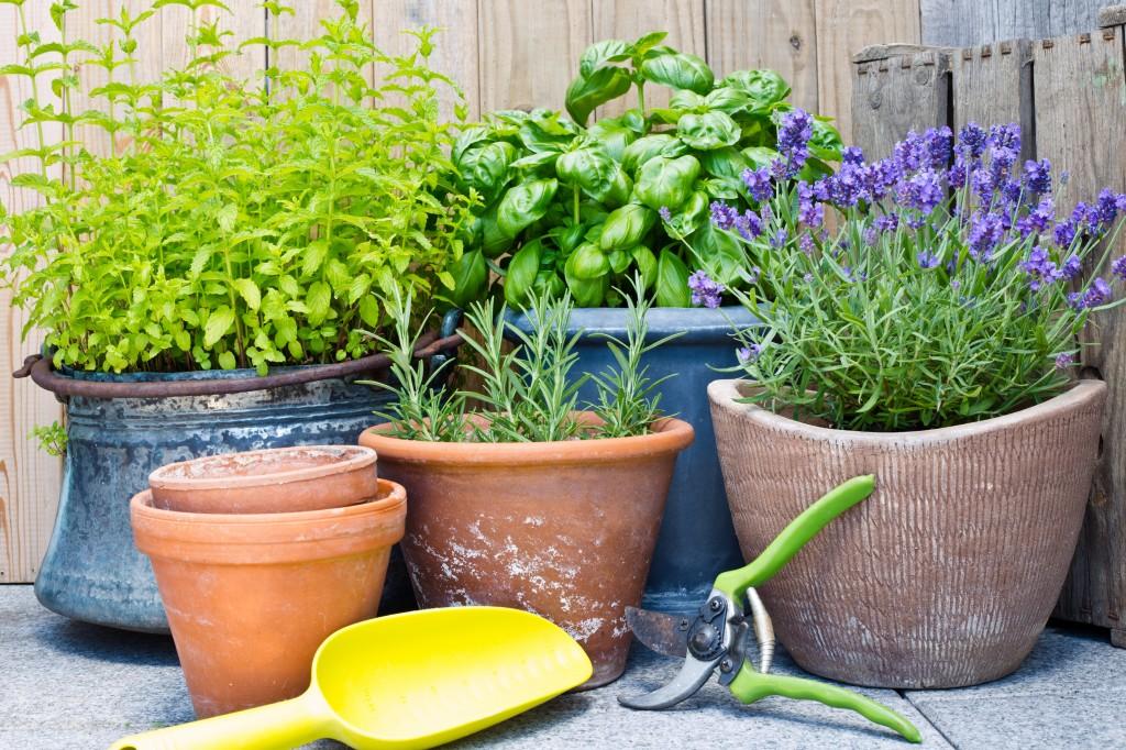 hierbas en contenedores