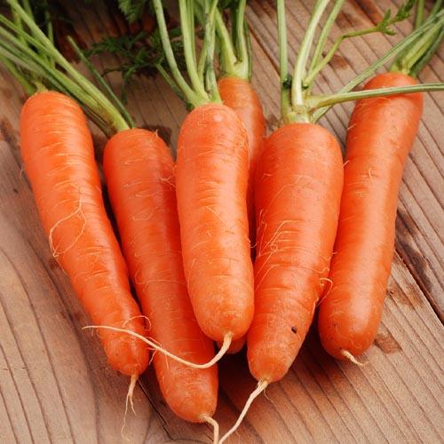 zanahorias nantes
