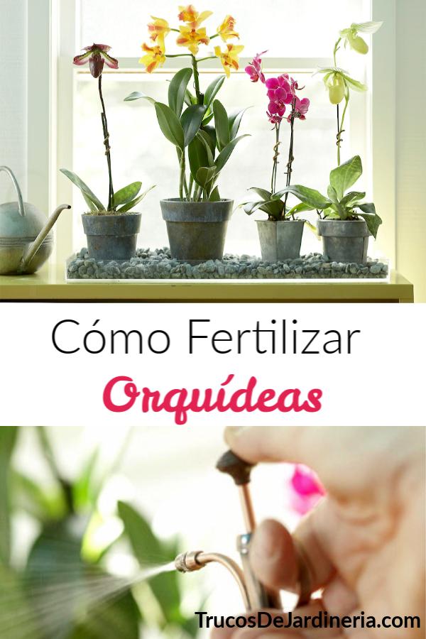Cómo Fertilizar Orquídeas