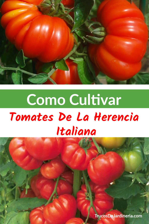Cultivar Tomates de la Herencia Italiana