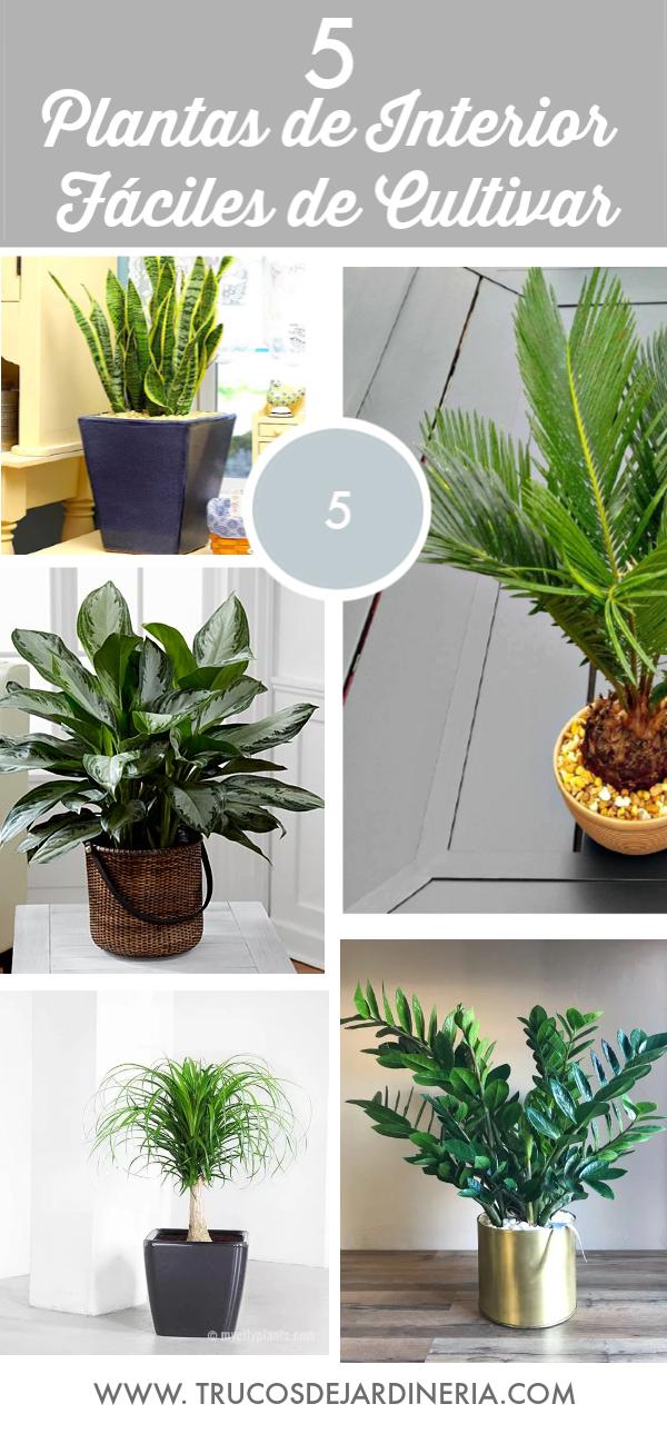 5 Plantas de Interior Fáciles de Cultivar