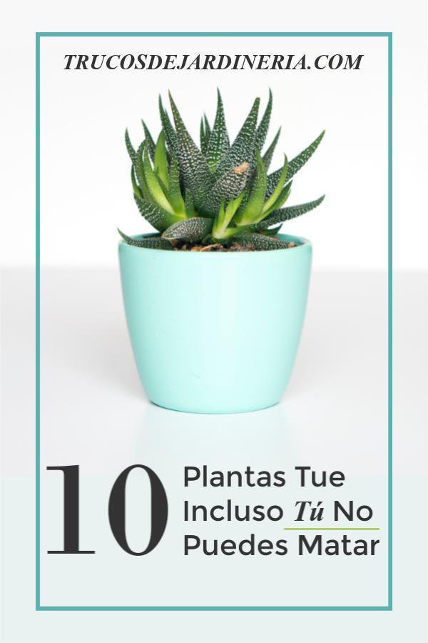 Plantas de Interiores que no Puedes Matar
