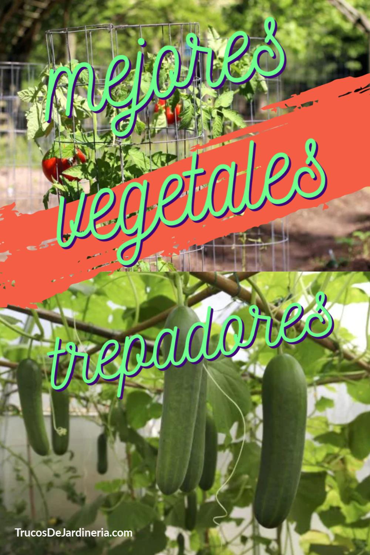 Vegetales Trepadores