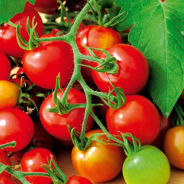 Tomates Alerta Roja