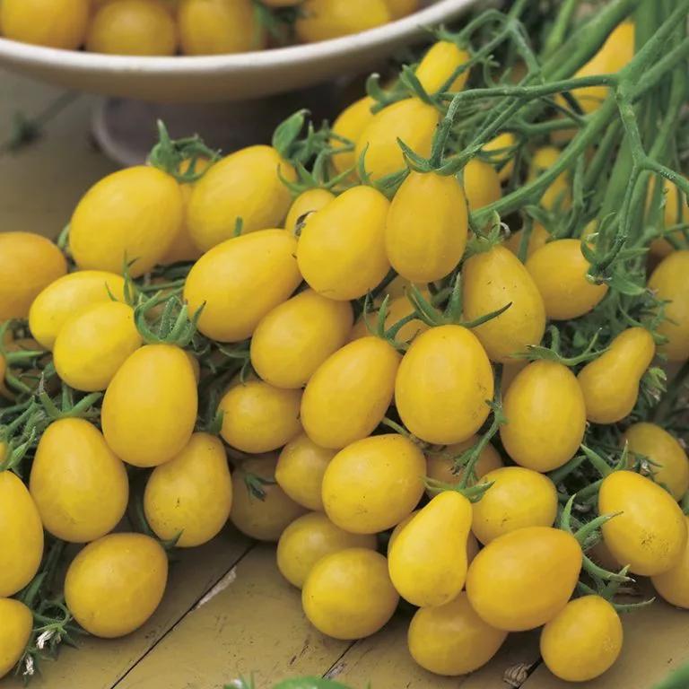 tomates ildi