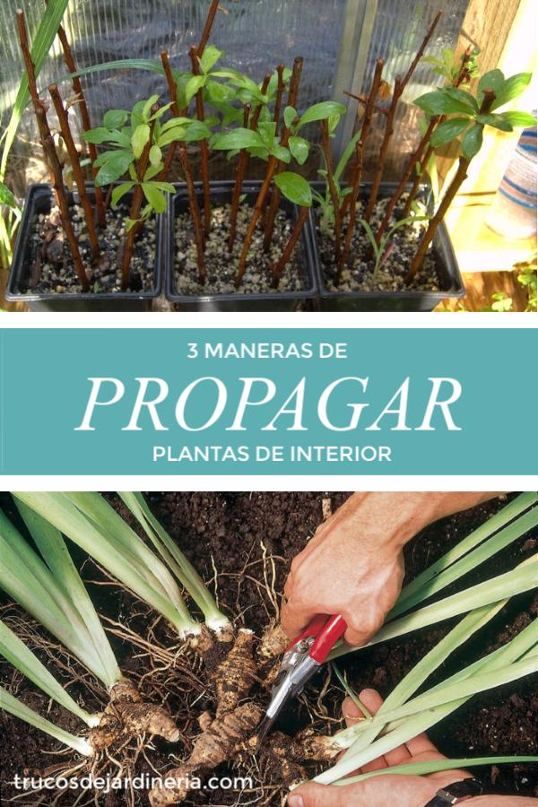Propagar Plantas