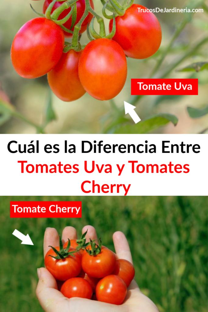 Diferencia entre Tomates Uva y Tomates Cherry